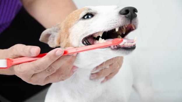 dog dental hygiene tips from sunnyvale veterinary clinic in california